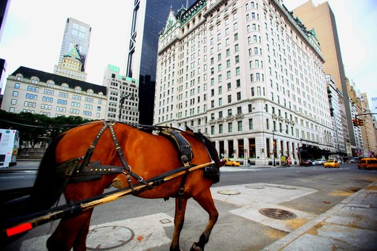 Loews Regency New York Hotel: two blocks from grand army plaza