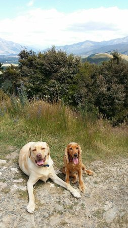 Conical Hill: Even the dogs loved it
