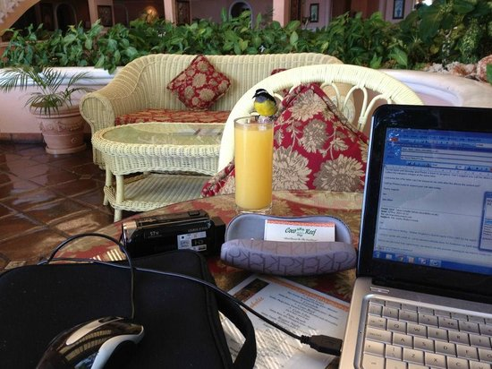 Coco Reef Tobago : Wi-Fi in lobby with friend