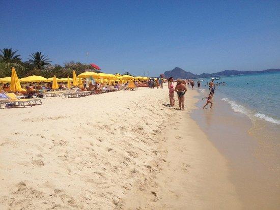 The Free Beach Club: La spiaggia e gli ombrelloni del Free Beach