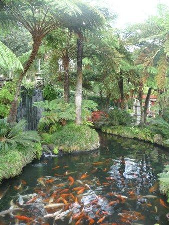 Monte Palace Tropical Garden: Tropical Garden in Funchal