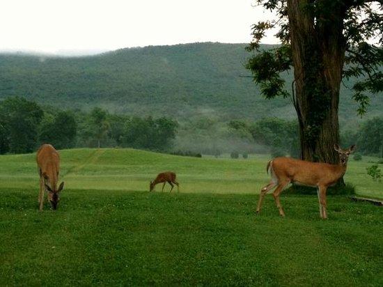 Dinner view of deer grazing at Walpack Inn