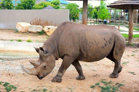 Southern Black Rhino - Picture of Tanganyika Wildlife Park, Goddard