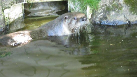 Buckfast Butterfly Farm and Dartmoor Otter Sanctuary: Swimming around
