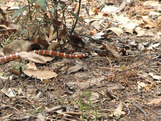 Cave Creek Canyon: snake !!