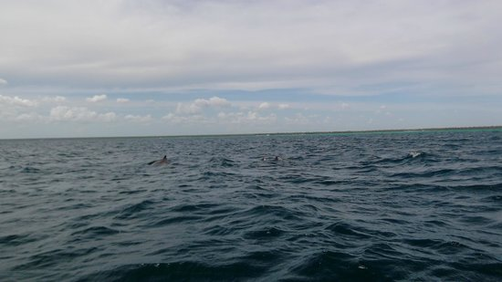 Dominican Quest - Tours: Our good luck to see a school of dolphins from the speedboat!
