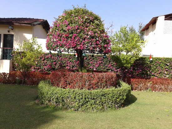 Brilliant horticulture work at Shikarbadi