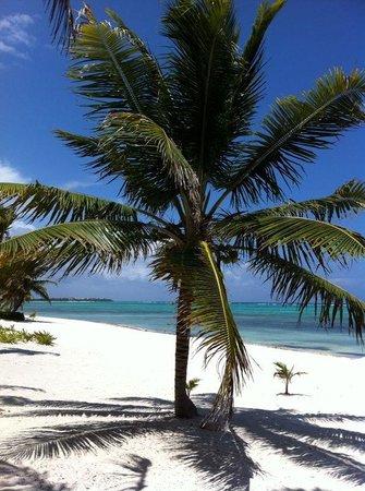 PavoReal Beach Resort Tulum: Splendida spiaggia e mare da sogno
