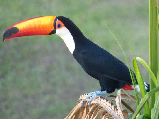 Meliá Iguazú: Morning visitor