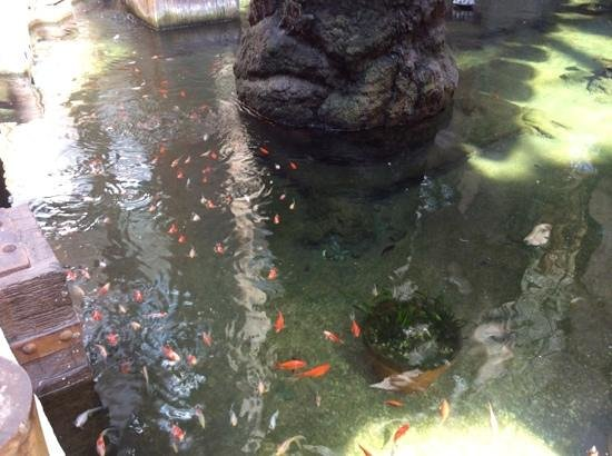 Holiday Polynesia: the fish in the water feature