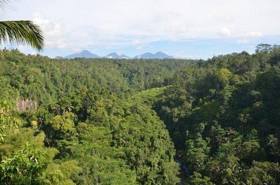 Ayung Resort Ubud: Beautiful view from the restaurant