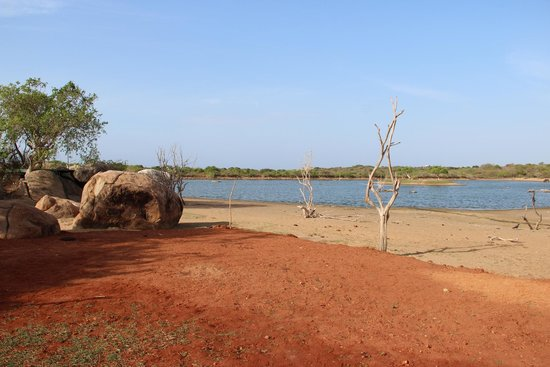 Cinnamon Wild Yala : View of the lake