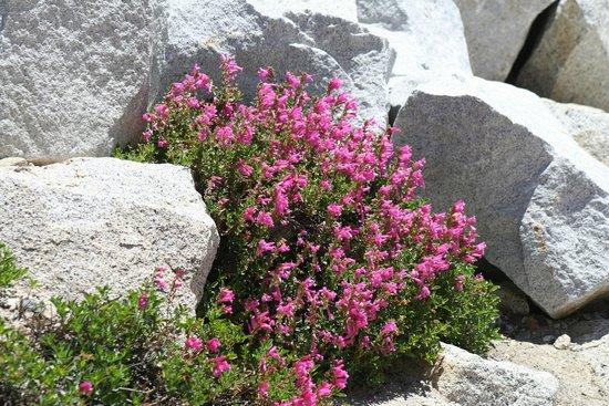 Yosemite Valley Lodge : Yosemite Wildflowers