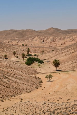Autre Tunisie Day Tours : oasis