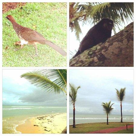 Arraial D'Ajuda Eco Resort: Natureza no resort