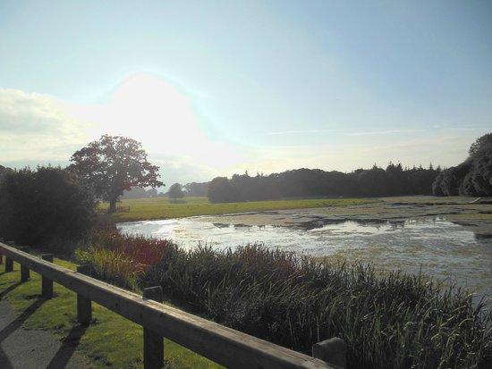 Castlemartyr Resort: Dintorni del resort