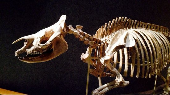 Denver Museum of Nature & Science : Old bones to be found.