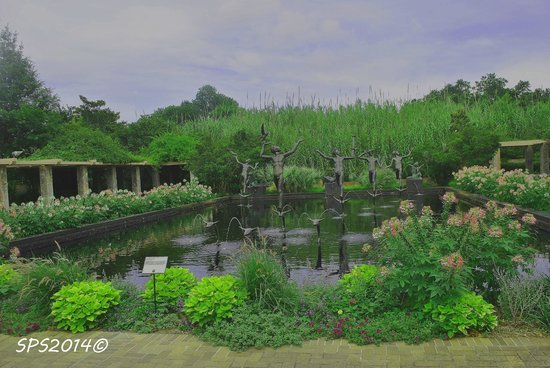 Brookgreen Gardens: sculpture pond surrounded by cleome