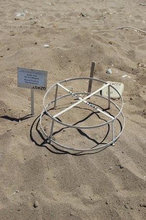 Lara Beach: Lieu de ponte des tortues