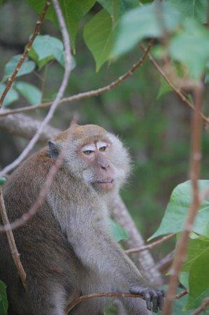 PhraNang Cave Beach: monos de la isla