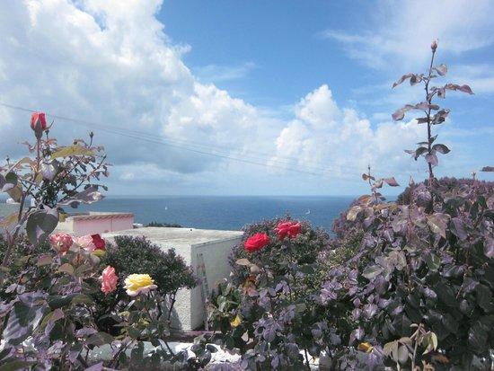 Park Hotel & Terme Romantica: розарий рядом с зоной завтрака