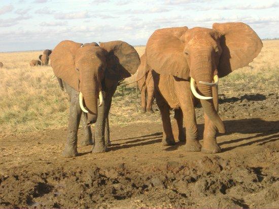 Steve & Richard Day Tours & Safaris : Elephants