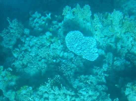 Tiran Island Hotel: Коралловый риф