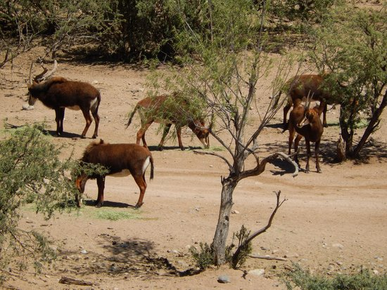 Out of Africa Wildlife Park: Nice variety of animals at the park