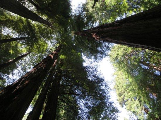San Francisco Shuttle Tours: Trees!!