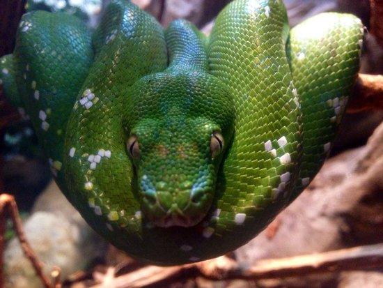 Bioparc Fuengirola: Seen thru the window all animals seem so .....