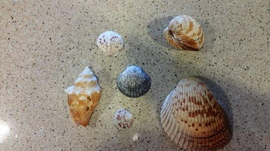 Ocean's Reach Condominiums: shells
