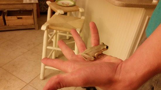 Ocean's Reach Condominiums: Cute frog