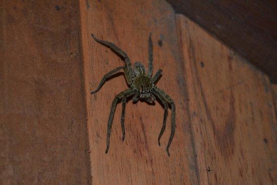 Arenal Oasis Eco Lodge & Wildlife Refuge : compagnie