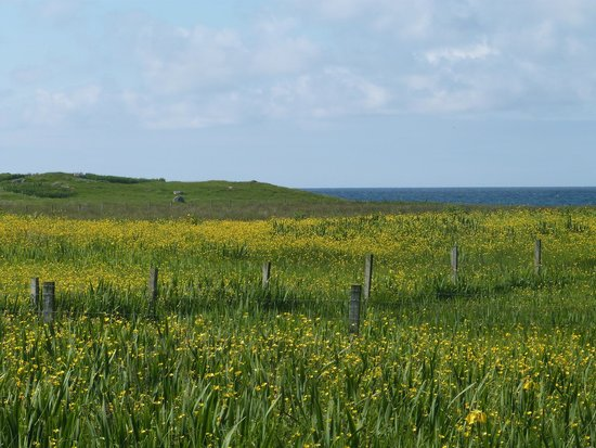 Western Isles Wildlife Tours: The Machair