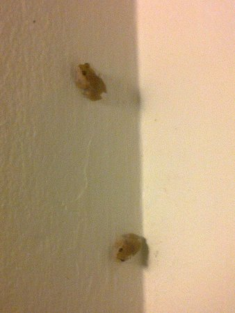 Rendezvous Resort: The frogs outside our room (quite noisy!)