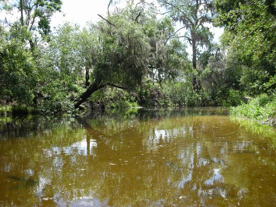 Canoe Outpost - Little Manatee River : more scenery