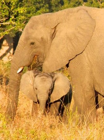 Dulini Lodge: baby elephant