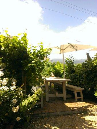Bramon Wine Estate : vista sui vigneti