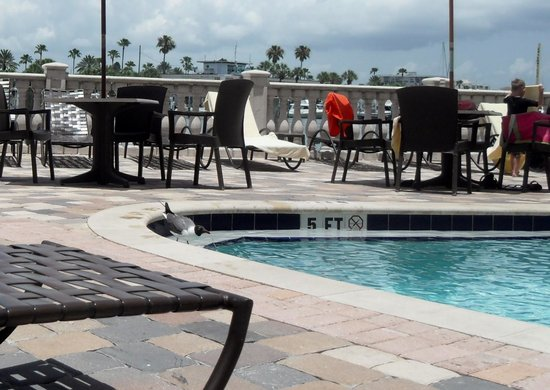 Pier House 60 Marina Hotel : pool