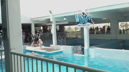 Clearwater Marine Aquarium : Winter's front pool