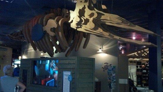 Clearwater Marine Aquarium : At Winter exhibit