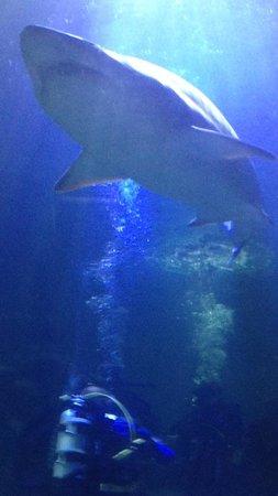 Deep Sea World: Must try