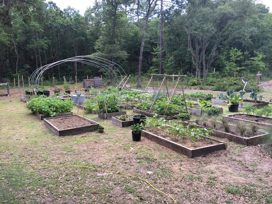 Tour Daufuskie : Sustainable farm garden
