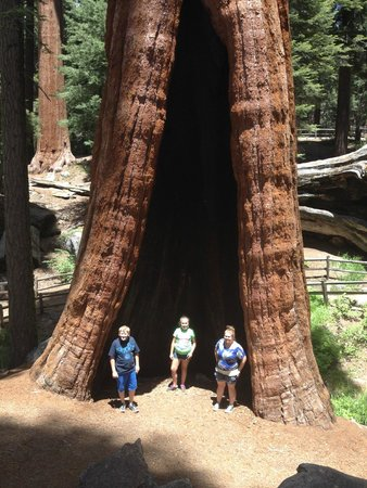 Parc national de Sequoia and Kings Canyon, Californie : Huge Sequoia trees
