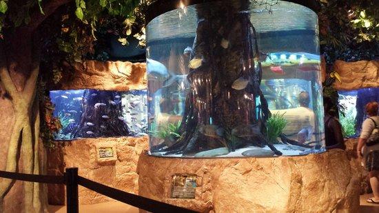 Kemah Boardwalk : In door aquarium