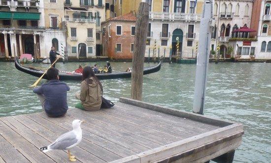Aurora Hotel: Венецианская чайка