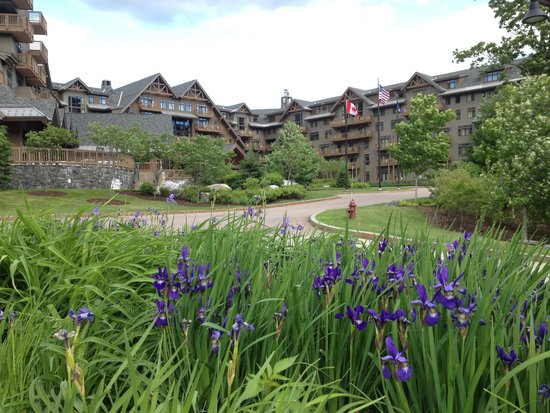 Stowe Mountain Lodge : Iris in bloom @ Entrance...