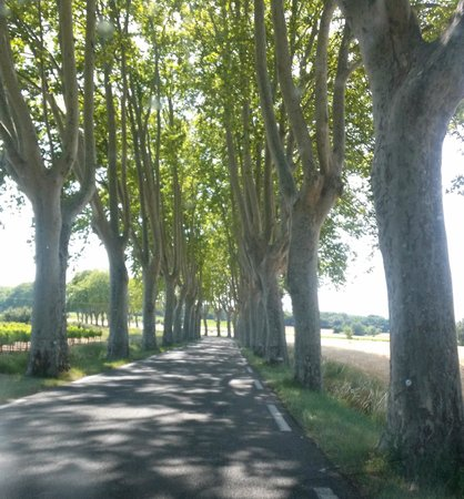 Le Mas des Oules: on the road to Uzes