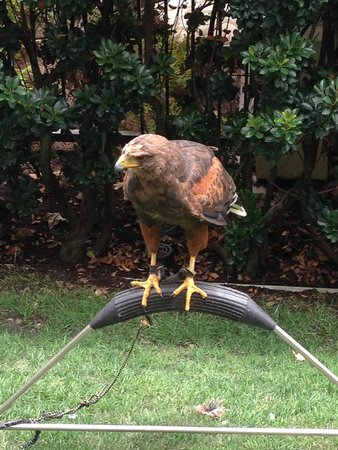 Mosaic Bar and Grille: wild bird interaction (sort of)