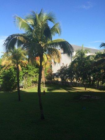 Memories Grand Bahama Beach and Casino Resort : Palm Tree